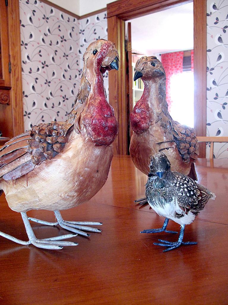 Odd Thanksgiving Birds