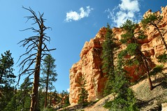 Queen's Garden Trail, Bryce Canyon National Park, Utah (Bertrand P) Tags: utah nationalpark trail deadtree brycecanyon brycecanyonnationalpark queensgardentrail