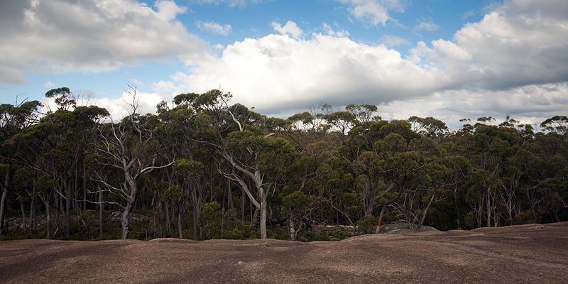 Granite, Gums and Clouds, 259/365