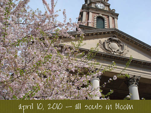 all souls in bloom