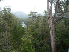 Tahune Forest Tahune Forest Air Walk Photo