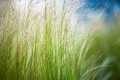 grasslands of los angeles (sam b-r) Tags: green grass spring s101361432
