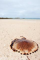 Connemara Coast (blakecorcoran) Tags: ireland dublin galway coast nikon jellyfish cork dingle baltimore glendalough kinsale connemara killarney d200 ballinasloe moher clifden nikond200