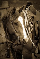 20090516-h brand tucker - 09-2 (h brand photography) Tags: art western ranchart hbrand fineartfinephotography