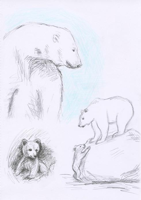 Study on bears