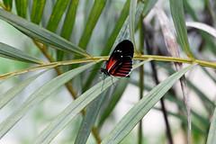 baudchon-baluchon-mindo-papillons-37