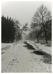 153 (AnkhaiStenn) Tags: road wood mist snow tree green ice grass fog forest river stream russia ukraine fir russian ukrainian spruce thunder ussr rovenki