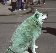 Green Dog (VFR Rider) Tags: epson perfection v500
