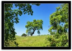 Leaning (scrapping61) Tags: california trees nature landscape spring gilroy legacy tqm netart 2010 tistheseason swp bellissima naturesfinest tmba coyotelake abigfave anawesomeshot harveybearranch scrapping61 daarklands trolledproud crazygeniuses tqmexcellence heavensshots pinnaclephotography