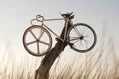 Oops (Brendan_Timmons) Tags: bike bicycle nikon perth fixie fixedgear swanriver aerospoke 50mmf14g d5000 arrospok