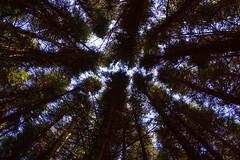 16.04.10-glentilt-03 (twistan) Tags: uk forest scotland woods perthshire pines 2010 glentilt