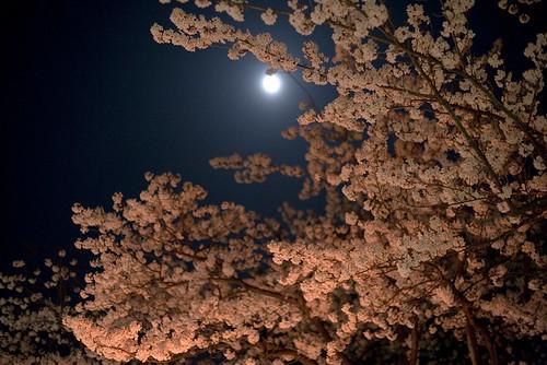 Tsuruoka Apr 2010