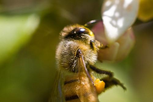 Bees__May062010_0005