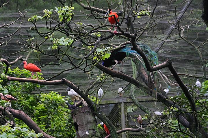 台北木柵動物園0019