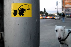 'Chasing Bones' (in Romania) (Pahnl) Tags: street dog art sign hope graffiti goal sticker dream romania signage chase bone slap optimism chasing pahnl