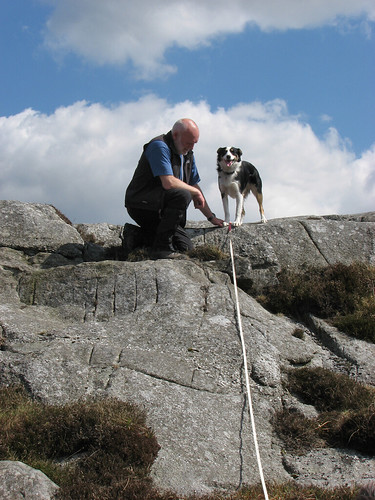 """Celyn """"helping"""" with the field work"""