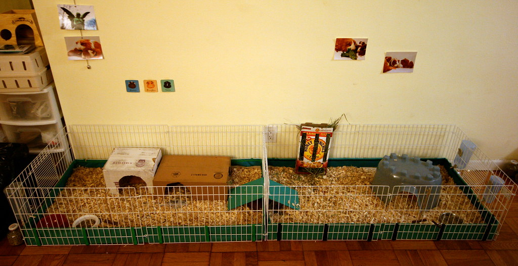 The Guinea Pig Cage