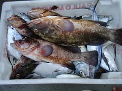 pescarias em cananeia