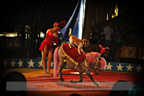 circus2web
