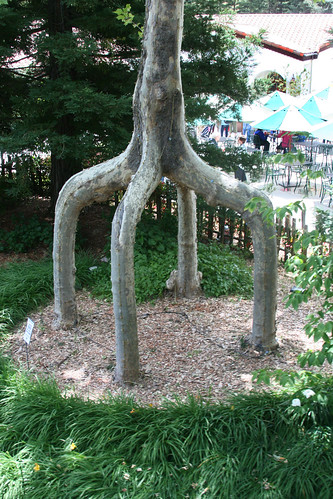table leg tree
