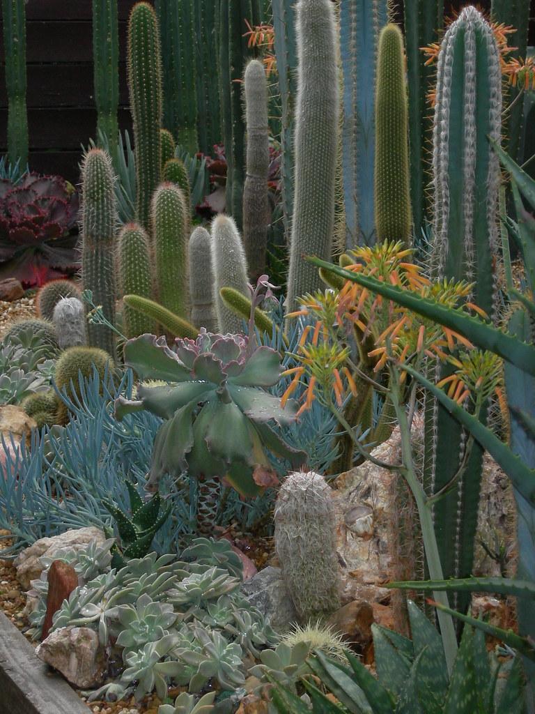 My C+S garden 4649400302_d0fe8060d7_b