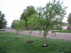 IMG_7278 (funny strange or funny ha ha) Tags: school trees oklahoma reunion town memorial day all weekend small fabulous avenue ok hooker pershing panhandle 2010