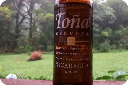 Cerveza (Horse in our yard)