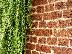 Textures (Arki Amit) Tags: camera plant green leaves stone fort textures harmony laterite digitalcameraclub amitrastogi amitrastogiphotography