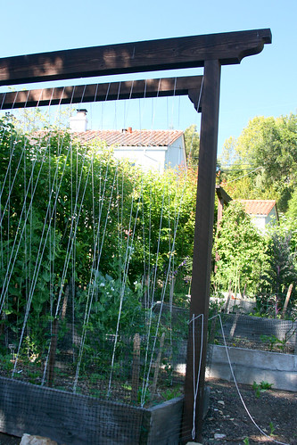 very nice bean trellis