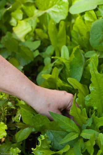 Pick'n Lettuce