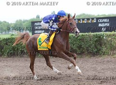 IMG_7628 (White Bear) Tags: horses track russia russian equestrian artem        makeev   thoroughbreed      equineracesrace
