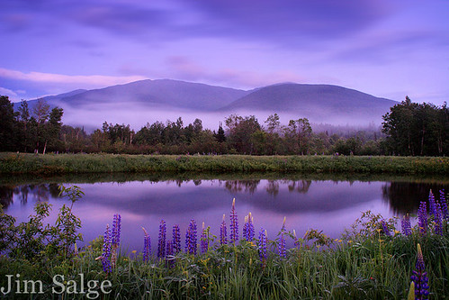 Movement and Still Lupines Over Madison
