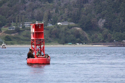 Sea Lion - Port Townsend