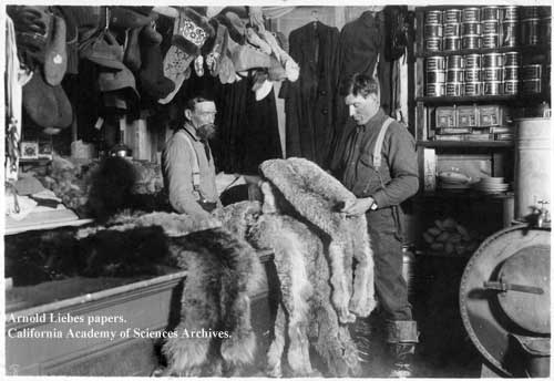 Examining pelts at traders.