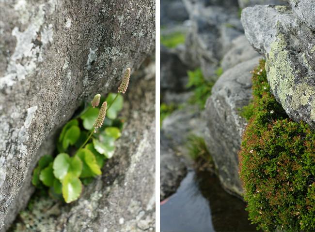 Rock Garden Diptych
