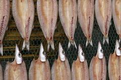 Drying Fish in Shimoda
