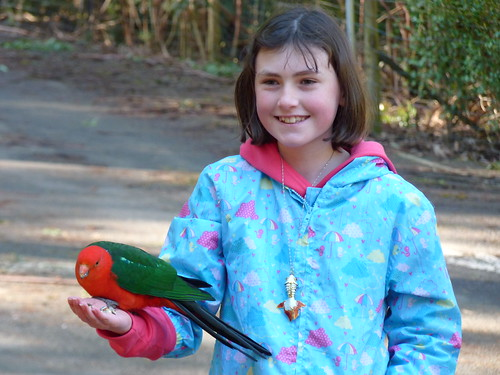 Sassy with Australian King Parrot