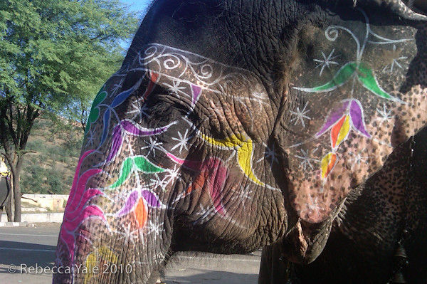 RYALE_Amber_Fort_Elephants_2