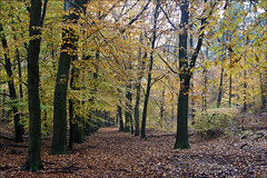 Forest in autumn mood (Foto Martien (thanks for over 2.000.000 views)) Tags: wood autumn holland color colour fall dutch forest automne woodland timber colorfull arnhem herbst herfst nederland bosque naturereserve otoo bos wald farbe couleur natuurmonument fort veluwe bois posbank timberland kleurrijk natuurmonumenten gelderland saison arrire kleur polychrome woud bont najaar forst veelkleurig stuwwal kleurig rheden natuurreservaat velp nationalparkveluwezoom herikhuizerveld desteeg a550 nationaalparkveluwezoom martienuiterweerd carlzeisssony1680 martienarnhem sonyalpha550 martienholland fotomartien zuidelijkveluwe beekhuizenseweg