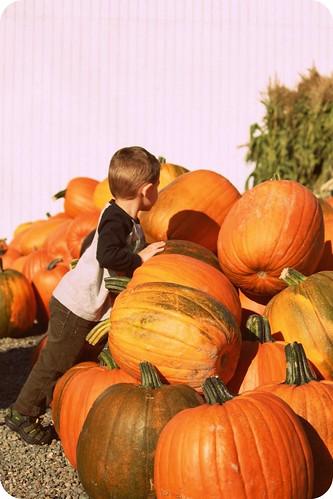 Arlin-pumpkin patch