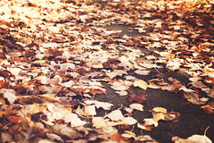 Cutomary Good Time (~Minnea~) Tags: fall leaves dof bokeh natureycrap 35mm18 nikond90 bokehwhores gimp268