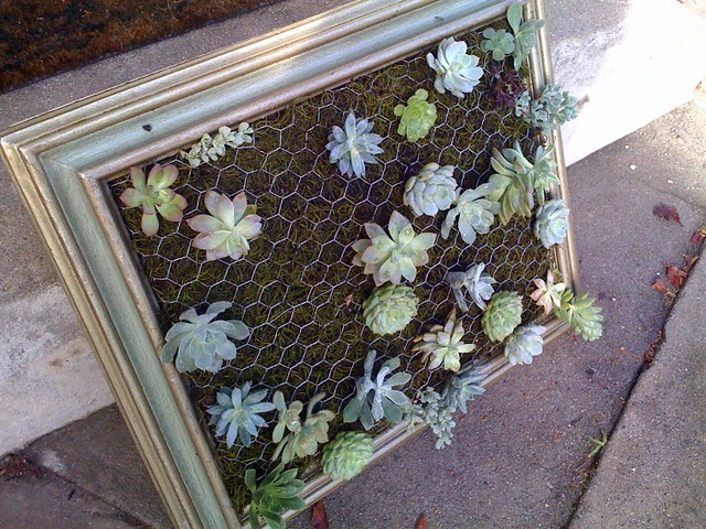 DIY Succulent Wall Planters - Empress of Dirt