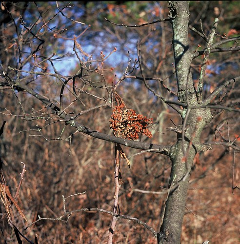 Albany Pine Bush, November 7, in Velvia