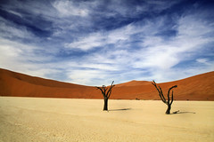 we stood side by side.. (areyarey) Tags: africa trees sky sun hot tree landscape photography sand warm desert dune tranquility nopeople heat sanddune barren sesriem namibia arid isolated sossusvlei namib deadvlei namibdesert hea beautyinnature acaciatree reddunes namibnaukluftnationalpark areyarey