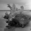 Wooden heart (Stephen J W) Tags: driftwood bronica acros sqb metung ei200 semistand ps80 gsd10