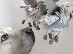 People on my way today (dangeri.away) Tags: portrait loving labrador angels doc musetto heismylove doggielife miocucciolo heismyangel magicunicornverybest magicunicornmasterpiece myyellowlabrador ldlportraits hehasanadorablesnout