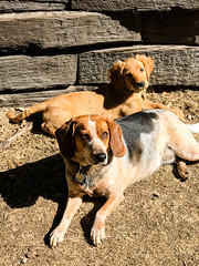 (emeksv) Tags: darkhorse pepper willow bestof homes pets type coloradosprings colorado unitedstates