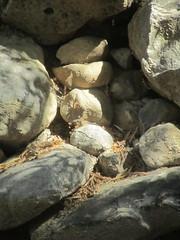Finca del Nino summer 2017 (LindseyS2008) Tags: fincadelnino periana cantueso rocks