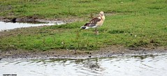 J78A0510 (M0JRA) Tags: birds parks gardens rspb lakes ponds fields trees nature snakes adda