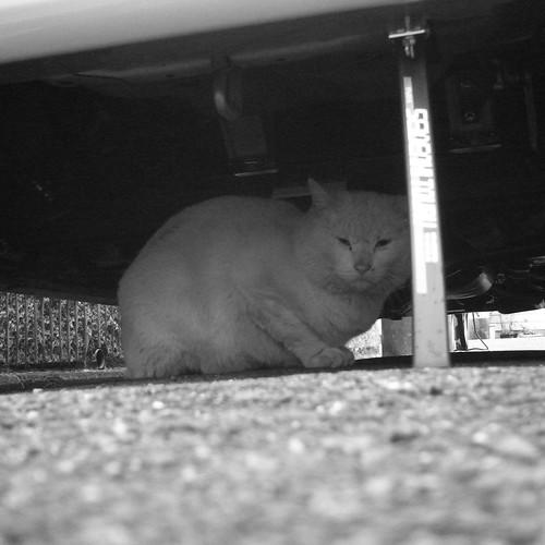Today's Cat@20091205